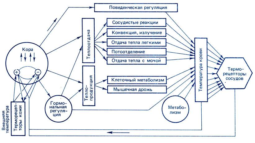 Схема функциональной системы